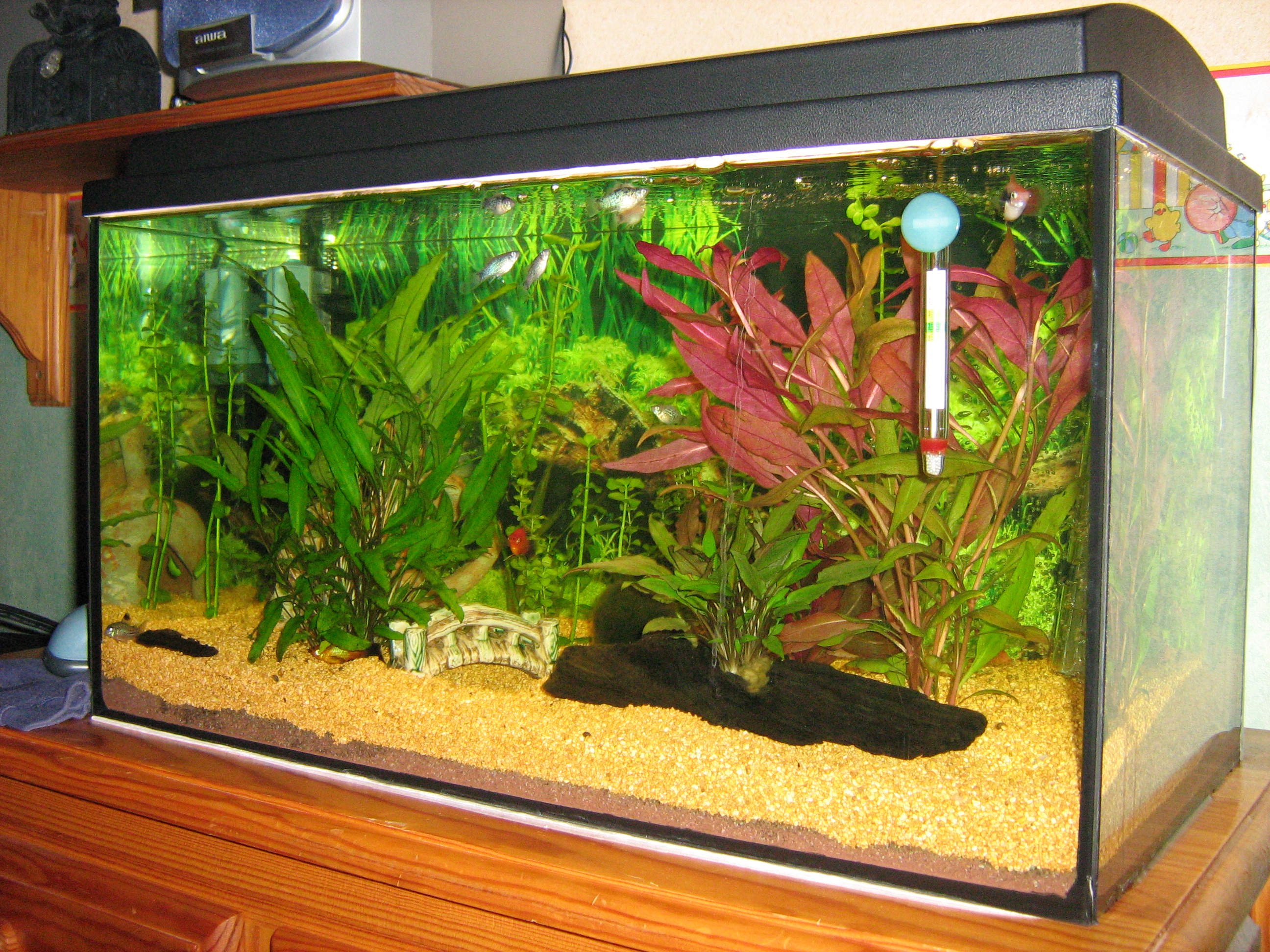 L aquarium de babo for Bac a poisson rouge
